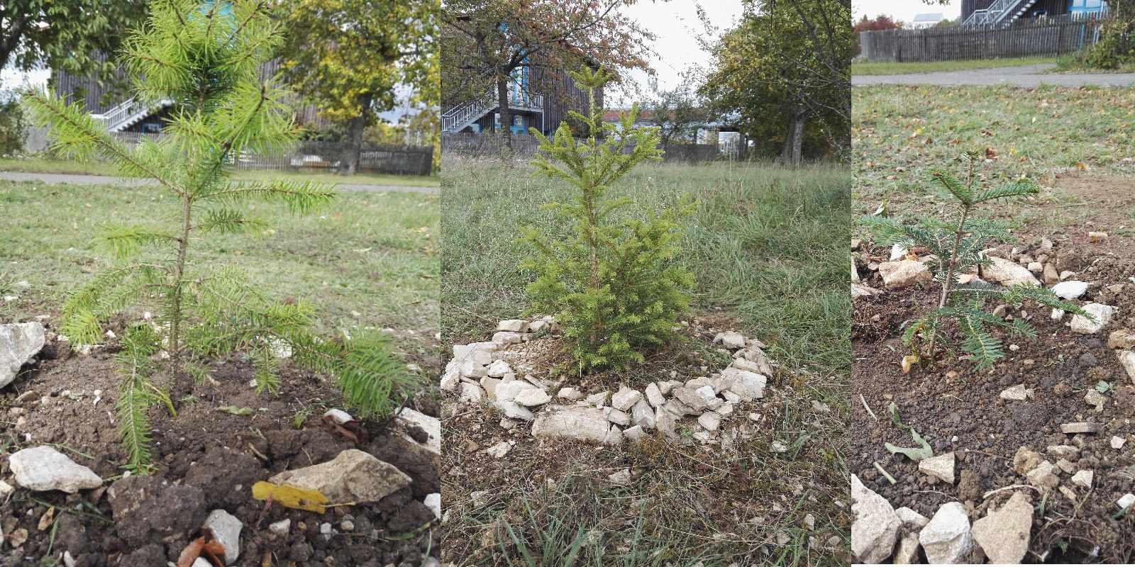 Wir pflanzen neue Bäume